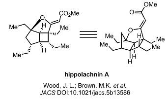 6 hippolachnin A_target.jpg