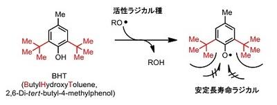 BHT mechanism.jpg