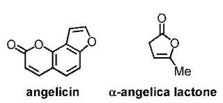 アンゲリシンとか.jpg
