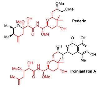 ペデリンイルシニアスタチン比較.jpg