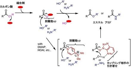 縮合剤一般機構.jpg