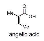 angelic acid.jpg