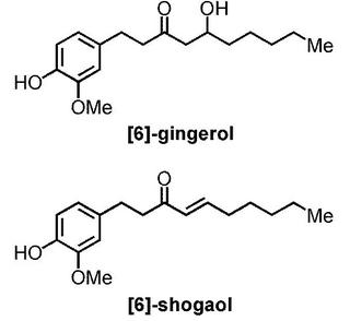 gingerolとshogaol.jpg