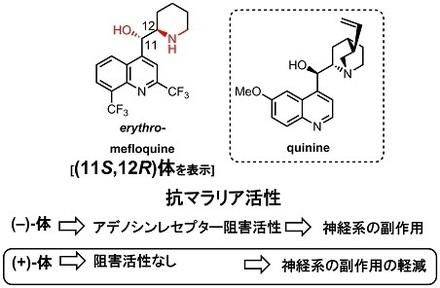 mefloquine2 0 構造と活性.jpg