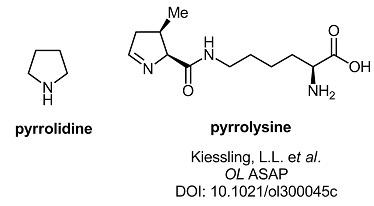 pyrrolysine.jpg