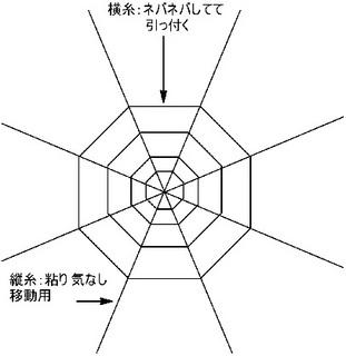 spider web.jpg